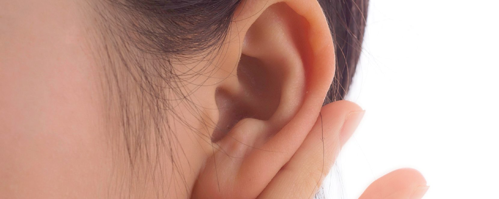 How the ear works?